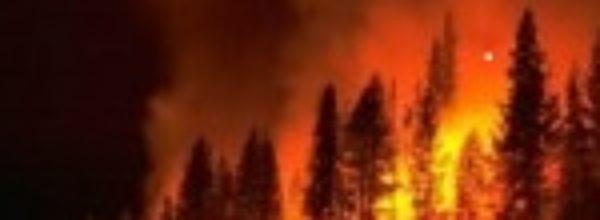 Nel sud  in fumo migliai di ettari di bosco.